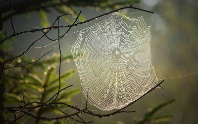 Het web van het leven